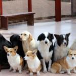 【MM2H】ペットの犬を連れて行くには?ー動物検疫